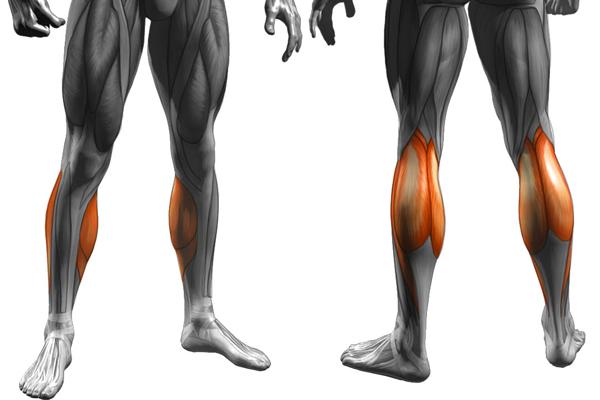 ふくらはぎの筋肉を鍛える
